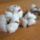 Cameroon's Cotton Development Corporation denies use of GMOs