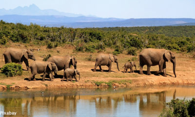 Botswana receives backlash on proposed lifting of elephant hunting ban