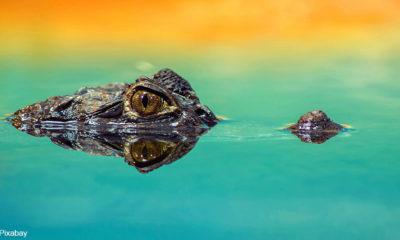 Mozambican authorities plan to kill crocodiles attacking fisherman
