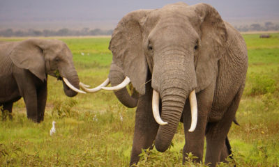 KBotswana to consult neighbours on lifting of elephant hunting ban