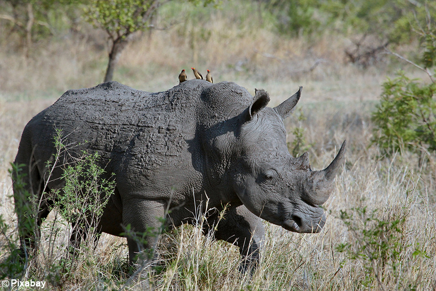 SAPS make biggest horn bust, two suspects arrested with 167 rhino horns