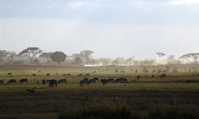 Significant growth rate for Kenya's travel and tourism in 2018