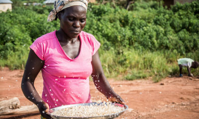 United Arab Emirates launches sustainable income project for rural Liberia n women