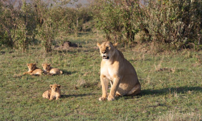 Kenyan government struggling to financially keep up with human-wildlife conflict