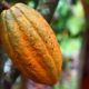 World Bank invests 300 million dollars into Ghana's cocoa sector